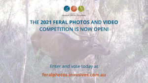 feral-photos-comp-2021-promo-twitter