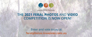 feral-photos-comp-2021-promo-email